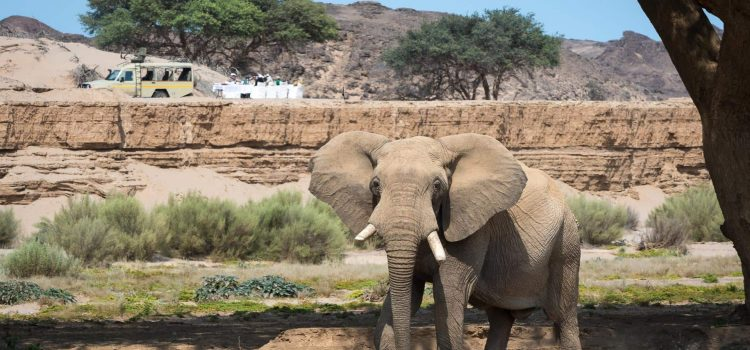 25 Years of Independence – 25 Reasons to Visit Namibia