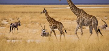 Alluring Africa – Wildlife and Wilderness