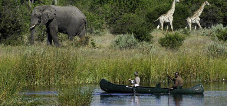 Best of Botswana and Victoria Falls
