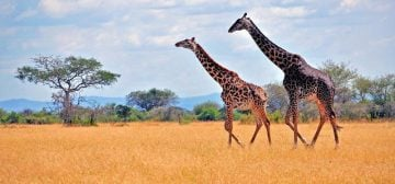 Top Sights of Tanzania