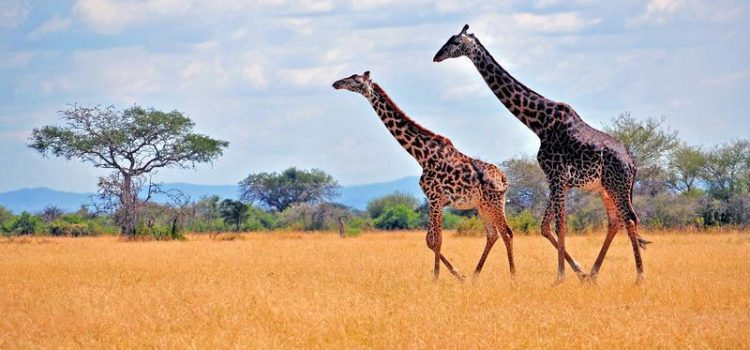 Top Sights in Tanzania