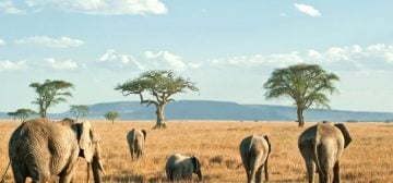 Tanzania Wildlife & Wilderness Safari