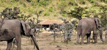 Zebra Plains Mara Camp