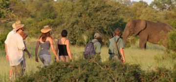 Plains Camp Home of Rhino Walking Safaris