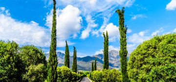 Big 5, Winelands & Cape Town