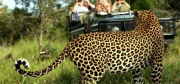 Best of South Africa Safari